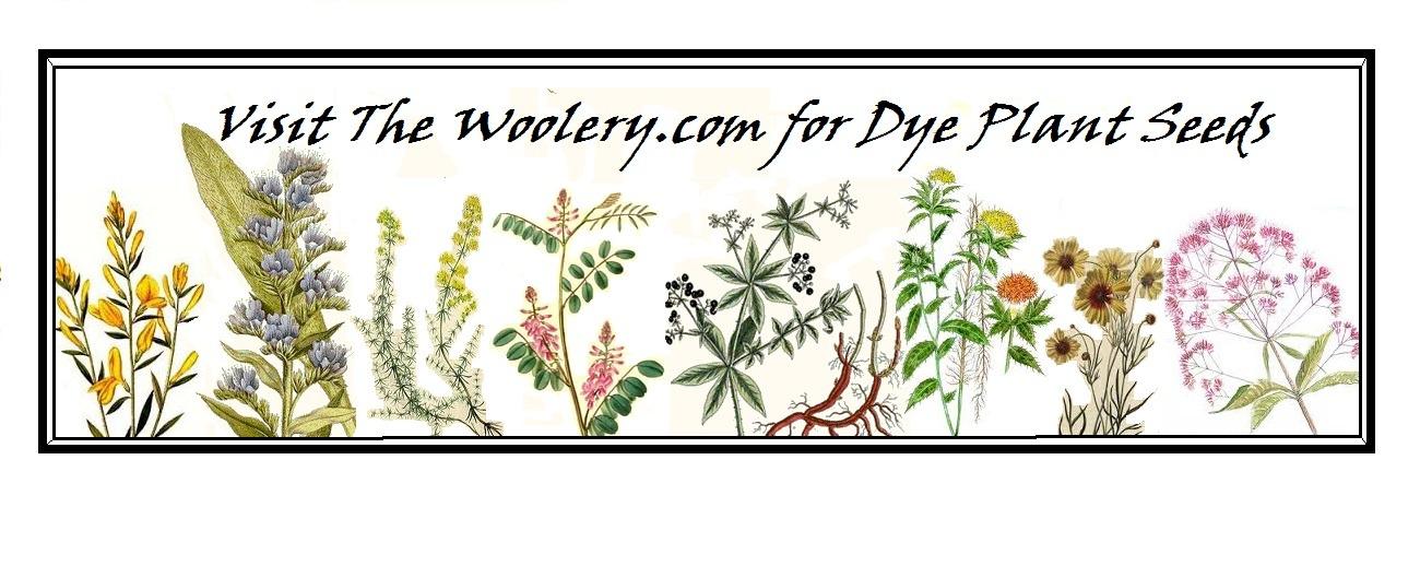 dye plants indigo, madder, bugloss,, dyers broom, , calliopsis, Joe Pye weed, lady's bedstraw, safflower