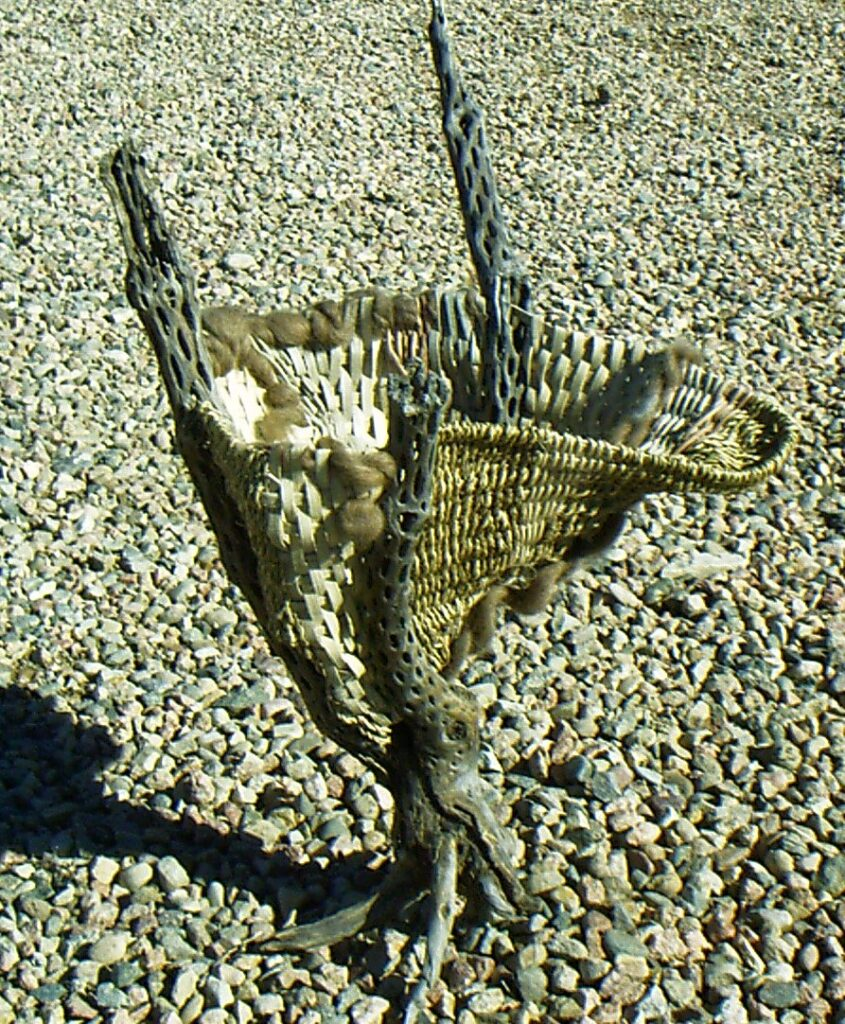 art basket made with cholla reed wool and seagrass at slowyarn.com