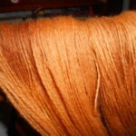 Bloodroot dyed yarn