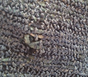 wool moth hole in rayon handweaving stored with wool